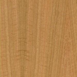 Eucalyptus FIG